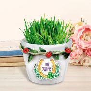 Растущий подарок, трава в горшочке «На удачу», фото 1