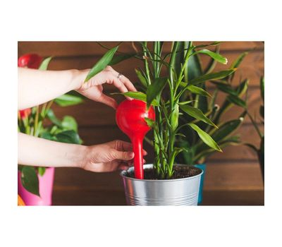 Автополив пластиковый для комнатных растений, фото 1