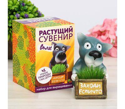 """Растущий подарок, трава в горшочке """"Волк"""", фото 1"""