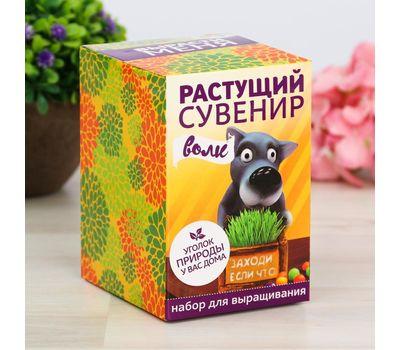 """Растущий подарок, трава в горшочке """"Волк"""", фото 4"""